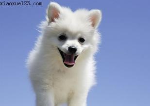 描写小狗的外形_描写小狗的作文_其他动物_第一作文网